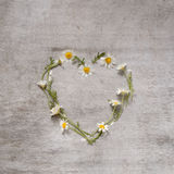 Daisy love symbol on old wooden background. Heart of daisies royalty free stock images
