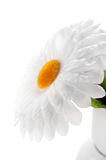 Daisy made ​​of fabric Stock Images
