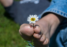 Daisy in Between Man`s Toes With Bee Royalty Free Stock Photography