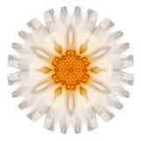 Daisy Mandala Flower Kaleidoscopic Isolated en blanco Imagen de archivo libre de regalías