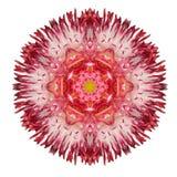 Daisy Mandala Flower Kaleidoscopic Isolated rouge sur le blanc Photographie stock