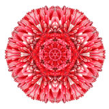 Daisy Mandala Flower Kaleidoscopic Isolated rouge sur le blanc photographie stock libre de droits