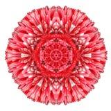 Daisy Mandala Flower Kaleidoscopic Isolated vermelha no branco fotografia de stock royalty free
