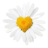 Daisy met hart in centrum Royalty-vrije Stock Fotografie