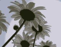 daisy mgławe ilustracji