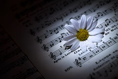 Daisy on Music Notes Sheet Stock Image