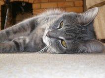 Daisy, my cat. My pet cat Daisy lying on the floor Royalty Free Stock Images