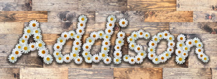 Daisy Name Addison Wood Background Images stock