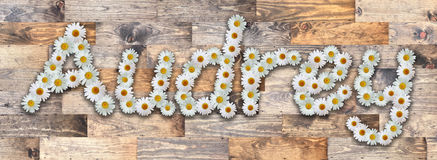 Daisy Name Audrey Wood Background. Name made from real daisy flowers on wood background Royalty Free Stock Image