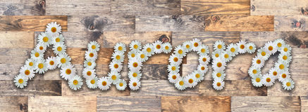 Daisy Name Aurora Wood Background. Name made from real daisy flowers on wood background Royalty Free Stock Image