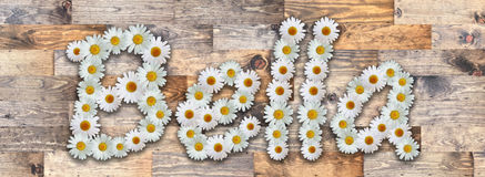 Daisy Name Bella Wood Background. Name made from real daisy flowers on wood background Royalty Free Stock Photography
