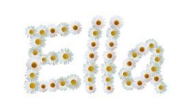 Daisy Name Ella Royalty Free Stock Image