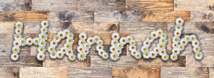 Daisy Name Hannah Wood Background. Name made from real daisy flowers on wood background Royalty Free Stock Photos