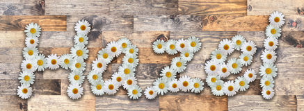 Daisy Name Hazel Wood Background. Name made from real daisy flowers on wood background Royalty Free Stock Images