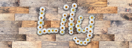 Daisy Name Lily Wood Background. Name made from real daisy flowers on wood background Royalty Free Stock Photography