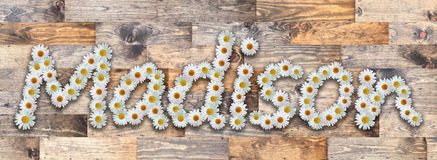 Daisy Name Madison Wood Background. Name made from real daisy flowers on wood background Royalty Free Stock Photos