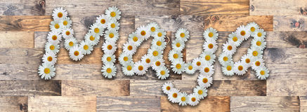 Daisy Name Maya Wood Background. Name made from real daisy flowers on wood background Royalty Free Stock Images