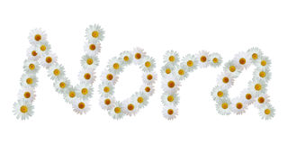 Daisy Name Nora Royalty Free Stock Images