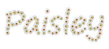 Daisy Name Paisley Stock Image