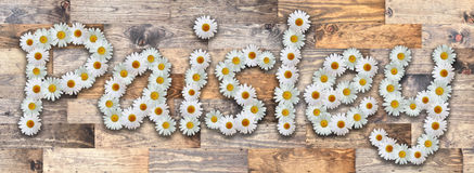 Daisy Name Paisley Wood Background. Name made from real daisy flowers on wood background Royalty Free Stock Photos
