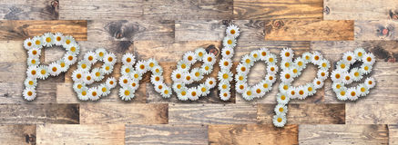 Daisy Name Penelope Wood Background. Name made from real daisy flowers on wood background Stock Photos