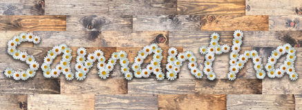 Daisy Name Samantha Wood Background. Name made from real daisy flowers on wood background Stock Photography