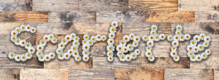 Daisy Name Scarlette Wood Background. Name made from real daisy flowers on wood background Royalty Free Stock Photos