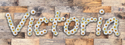 Daisy Name Victoria Wood Background. Name made from real daisy flowers on wood background Stock Photos