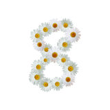 Daisy Number Eight Image stock