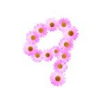 Daisy Number Nine cor-de-rosa Imagens de Stock