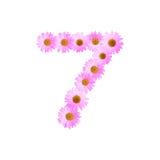 Daisy Number Seven rosa Immagini Stock