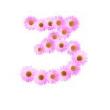 Daisy Number Three rosada Foto de archivo libre de regalías