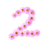 Daisy Number Two rosa Immagine Stock Libera da Diritti