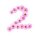 Daisy Number Two rosada Imagen de archivo libre de regalías