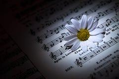 Daisy op Muziek neemt nota van Blad stock afbeelding