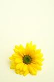 Daisy op subtiele geel stock foto's