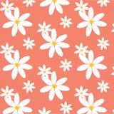Daisy Pattern bonito Imagem de Stock