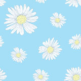 Daisy pattern. Daisy seamless pattern on blue Stock Image