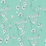 Daisy pattern Stock Images