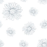Daisy pattern. Daisy seamless pattern on white Stock Photography