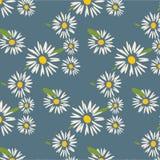 Daisy Pattern sveglia Immagine Stock