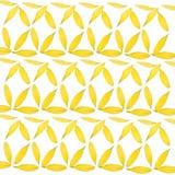Daisy Petal Background Stock Image