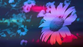 Large white daisy with red green and blue colour splashes royalty free stock photos