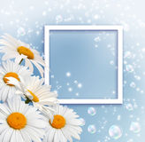 Daisy and photo frame Stock Photography