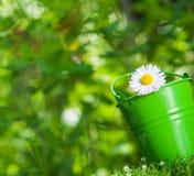 daisy piękny kwiat Fotografia Royalty Free