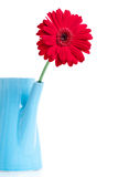Daisy in a pitcher Stock Image