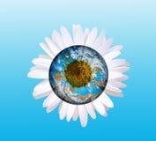 Daisy planet Royalty Free Stock Image
