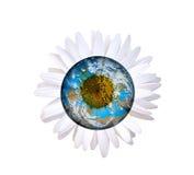 Daisy planet Stock Photo