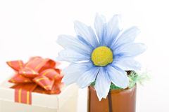 Daisy and present. An isolated picture of a fake daisy in a pot and a present wrapped with a bow in the background Royalty Free Stock Photo