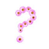 Daisy Question Mark rosada Fotos de archivo libres de regalías